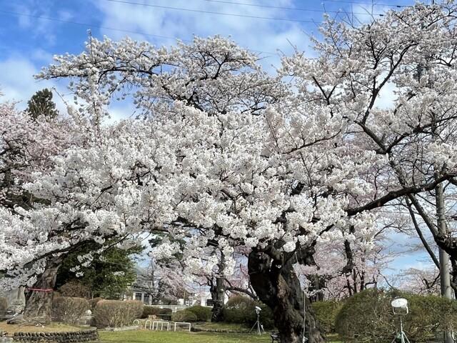 水沢公園の写真