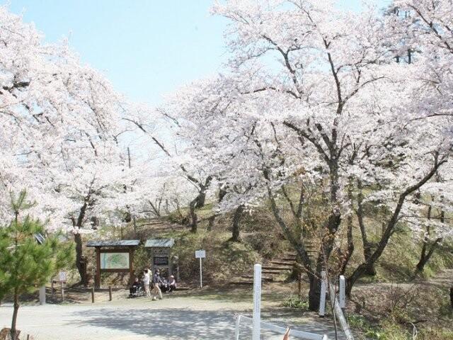 八乙女公園の写真