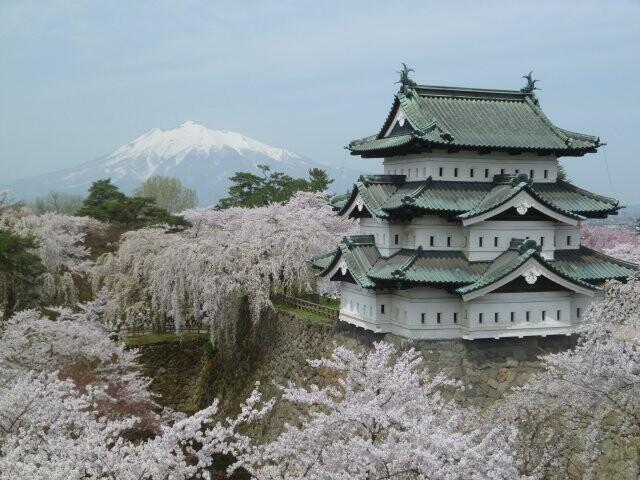 弘前公園のソメイヨシノの写真
