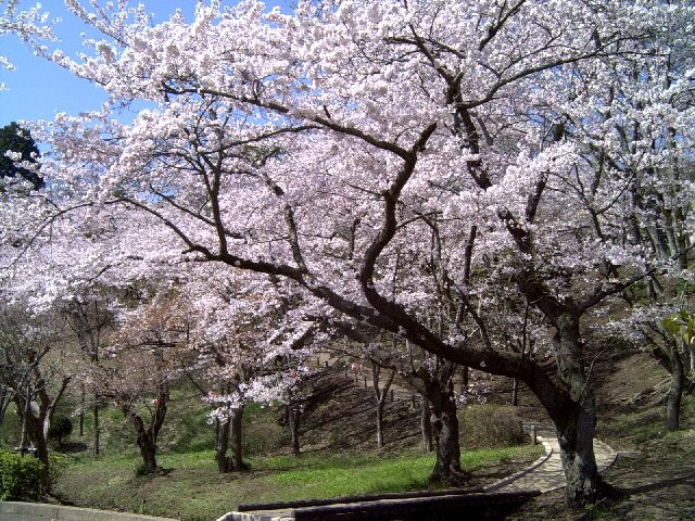 桜山公園の写真