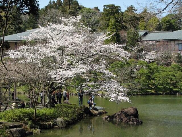 成田山公園の写真