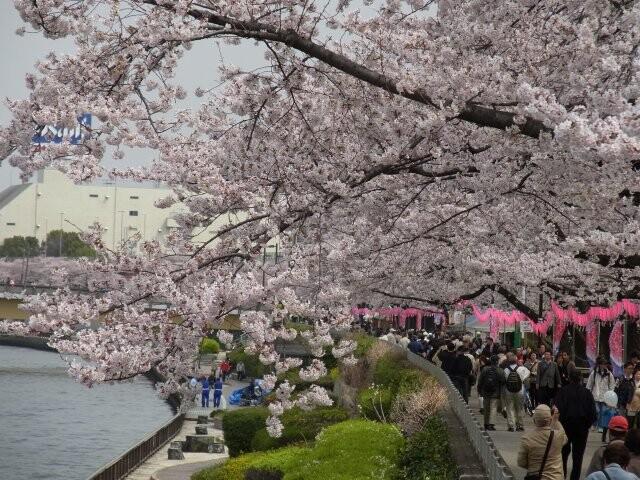 隅田公園の写真