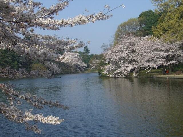 大宮公園の写真