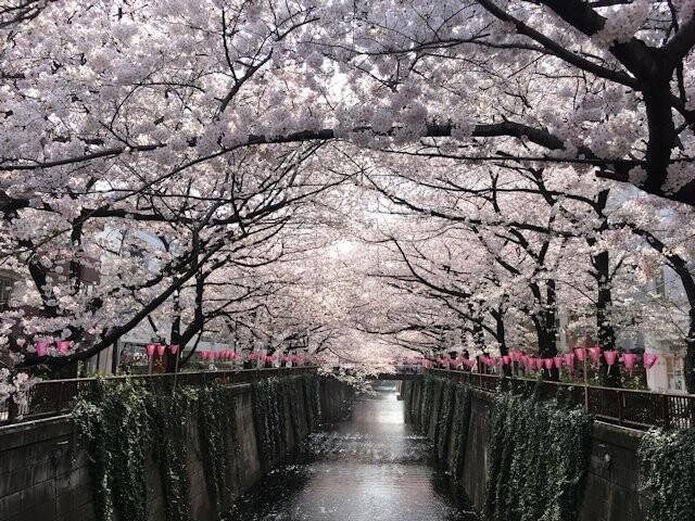 目黒川の写真