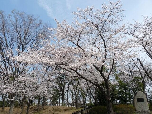 舎人公園の写真