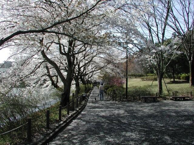 釜の淵公園の写真