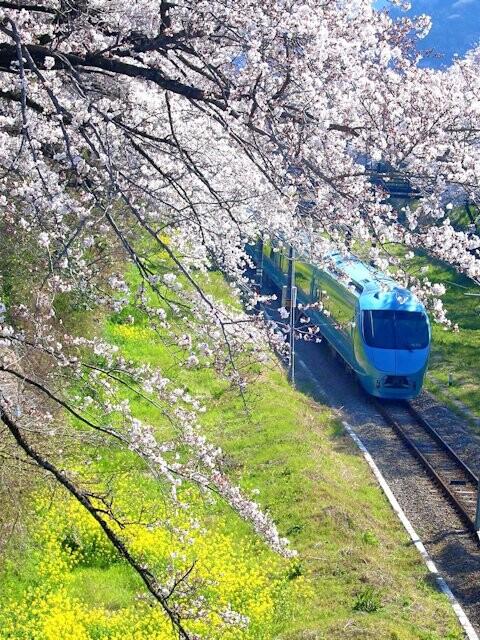 山北鉄道公園(御殿場線沿い桜並木の通り)の写真