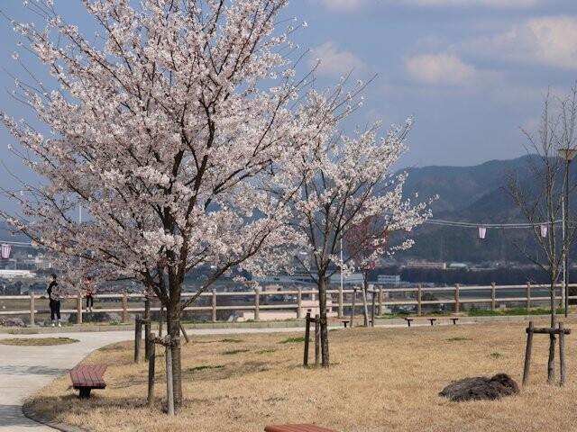 松岡公園の写真