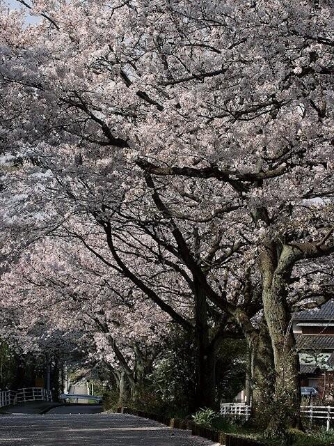 大堰宮公園の写真