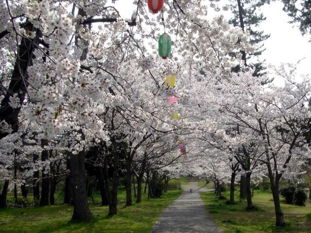 一本松公園の写真