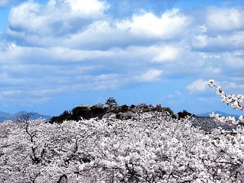 国宝・彦根城の写真