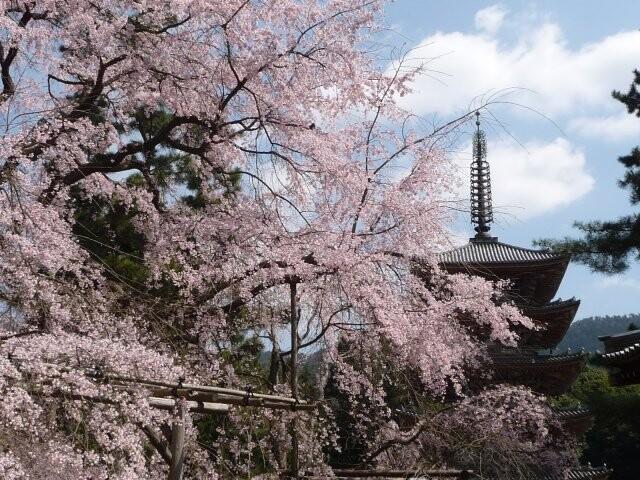 醍醐寺の写真