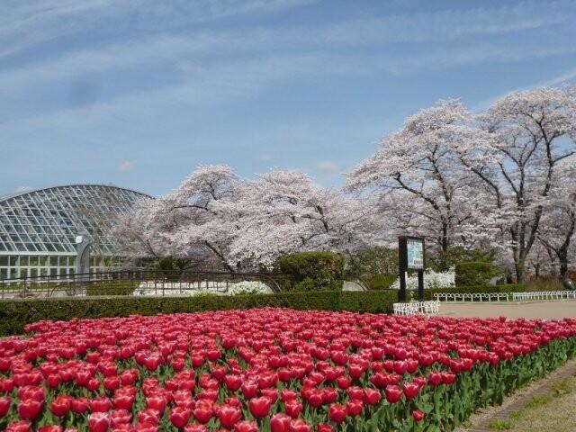京都府立植物園の写真