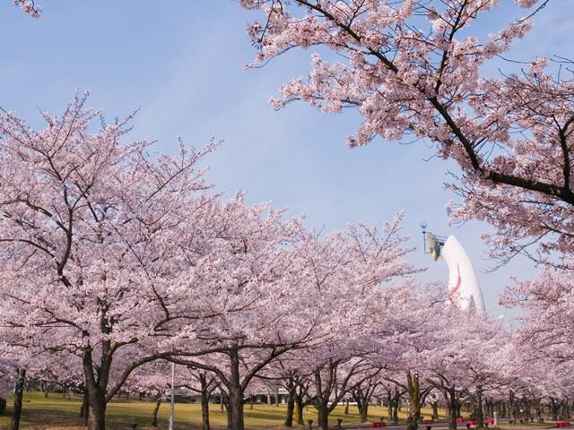 万博記念公園の写真
