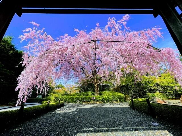 退蔵院(妙心寺山内)の写真