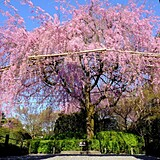 退蔵院(妙心寺山内)