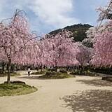笠置山自然公園(木津川畔)