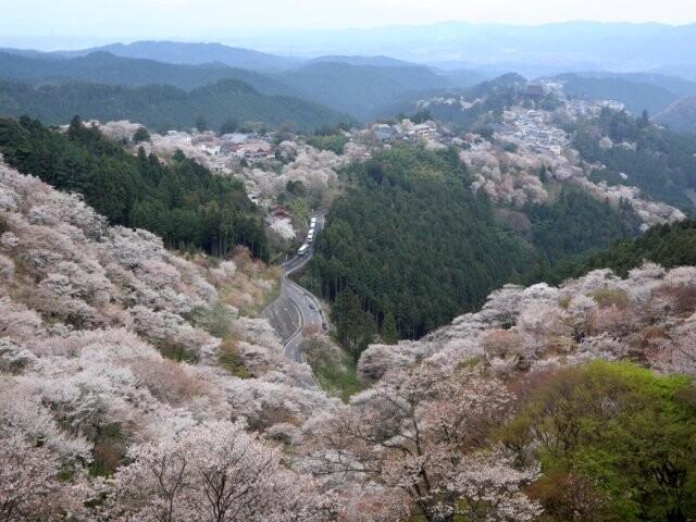 吉野山(上千本)の写真