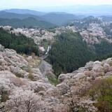 吉野山(上千本)