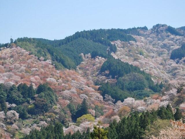 吉野山(中千本)の写真