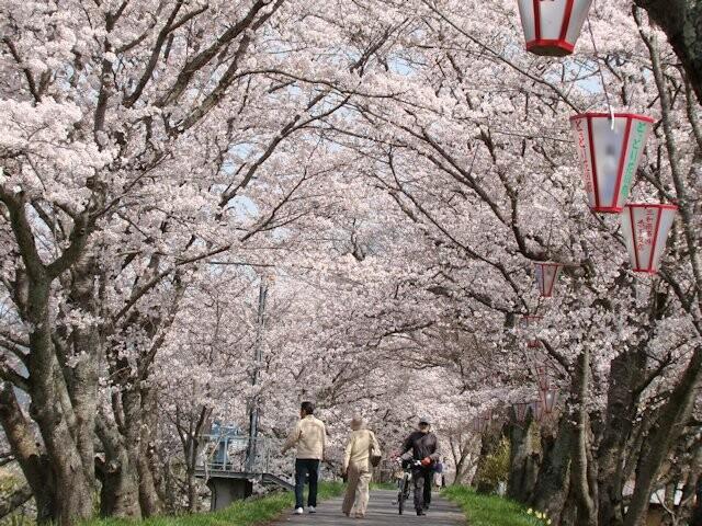 城山公園・法勝寺川土手の写真
