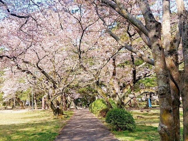 出雲大社神苑の写真