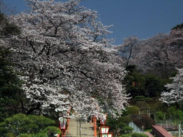 岡山市半田山植物園の写真