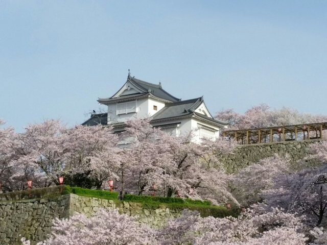 津山城(鶴山公園)の写真