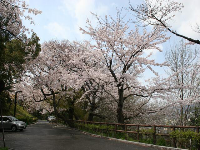 江波山公園の写真