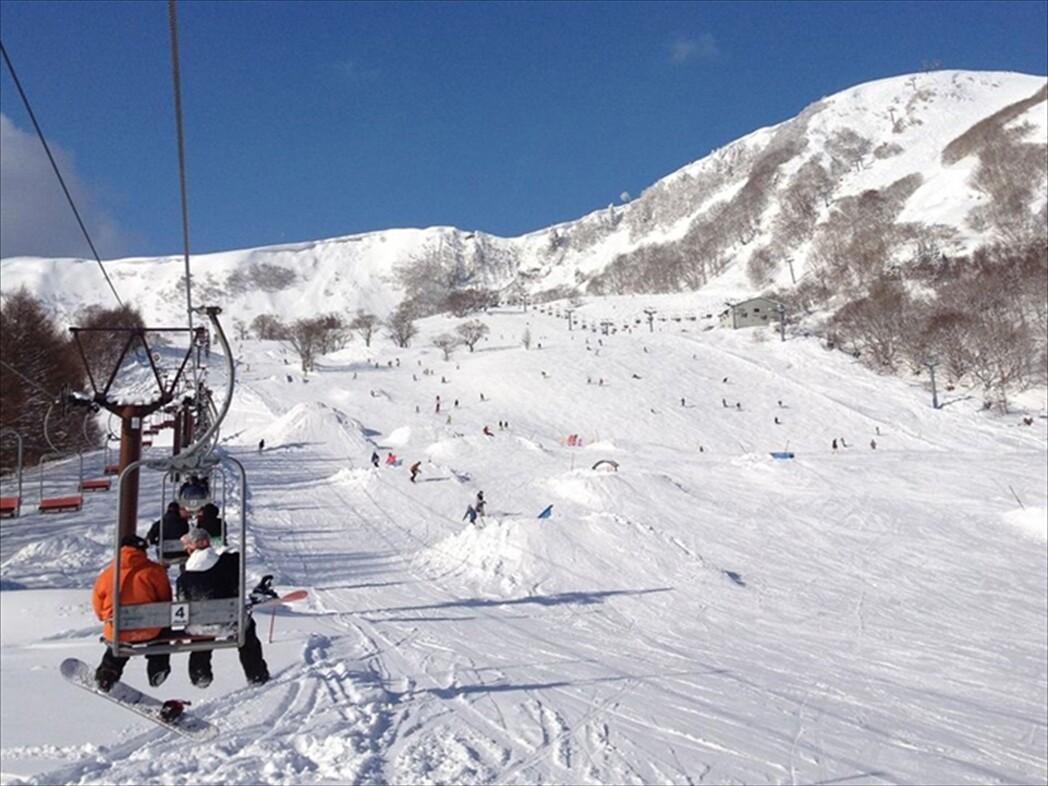高原 スキー ハチ