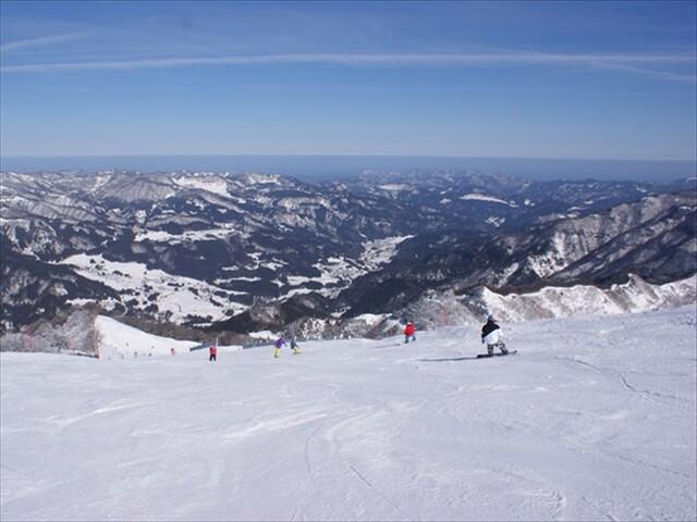 スキー 場 北 ハチ